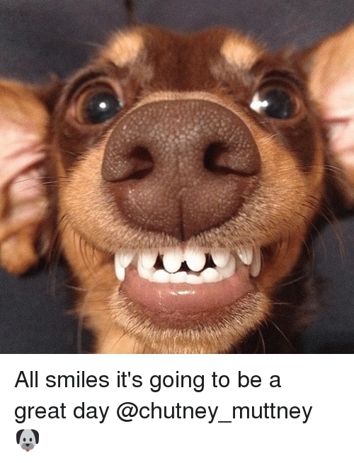 All Smiles It's Going to Be a Great Day 🐶 | Meme on ME ME