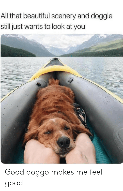 Beautiful, Good, and All That: All that beautiful scenery and doggie  still just wants to look at you Good doggo makes me feel good