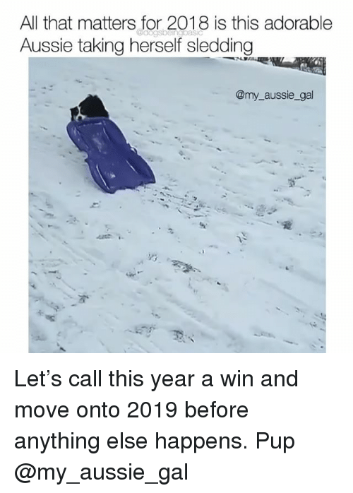Memes, All That, and Pup: All that matters for 2018 is this adorable  Aussie taking herself sledding  @my aussie_gal Let's call this year a win and move onto 2019 before anything else happens. Pup @my_aussie_gal