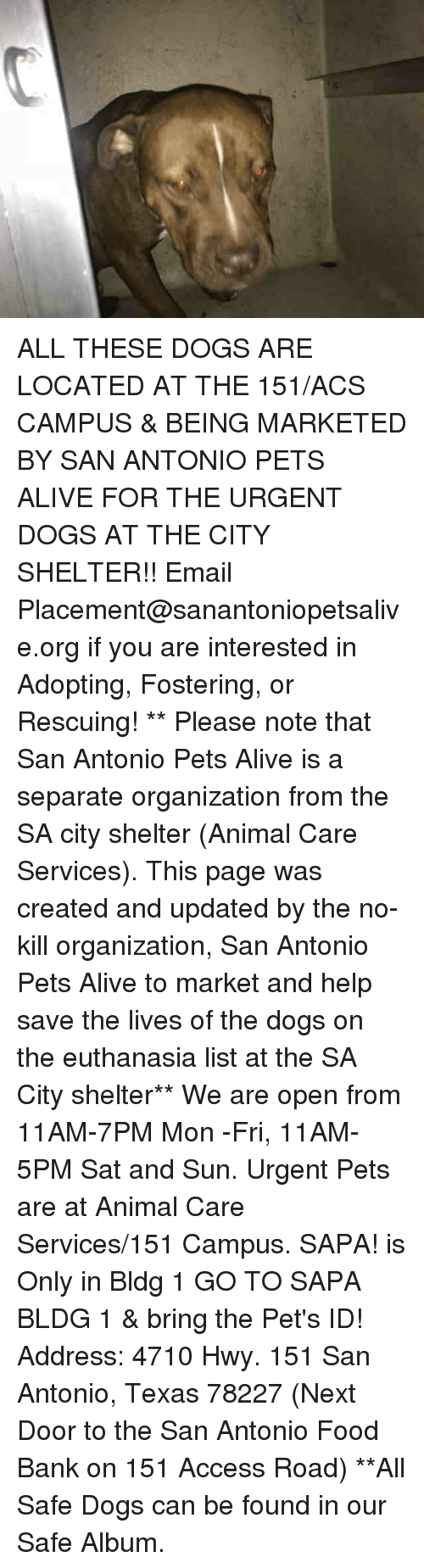 Alive, Dogs, and Food: ALL THESE DOGS ARE LOCATED AT THE 151/ACS CAMPUS & BEING MARKETED BY SAN ANTONIO PETS ALIVE FOR THE URGENT DOGS AT THE CITY SHELTER!!  Email Placement@sanantoniopetsalive.org if you are interested in Adopting, Fostering, or Rescuing!                                                                                                                                                                                                                                                                                                                                                             ** Please note that San Antonio Pets Alive is a separate organization from the SA city shelter (Animal Care Services). This page was created and updated by the no-kill organization, San Antonio Pets Alive to market and help save the lives of the dogs on the euthanasia list at the SA City shelter**  We are open from 11AM-7PM Mon -Fri, 11AM-5PM Sat and Sun. Urgent Pets are at Animal Care Services/151 Campus. SAPA! is Only in Bldg 1 GO TO SAPA BLDG 1 & bring the Pet's ID! Address: 4710 Hwy. 151 San Antonio, Texas 78227 (Next Door to the San Antonio Food Bank on 151 Access Road) **All Safe Dogs can be found in our Safe Album.