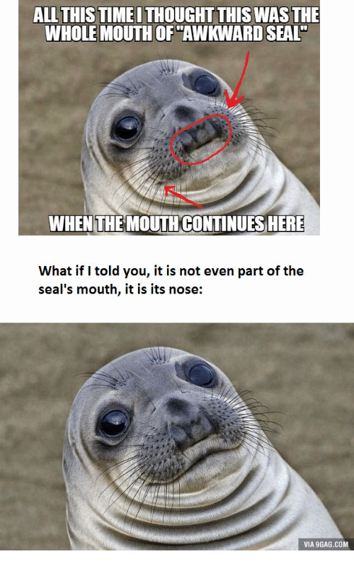 all this timeithought this was the wholemouth of awkward seal 14243156 ✅ 25 best memes about awkward seal original awkward seal,Seal Meme