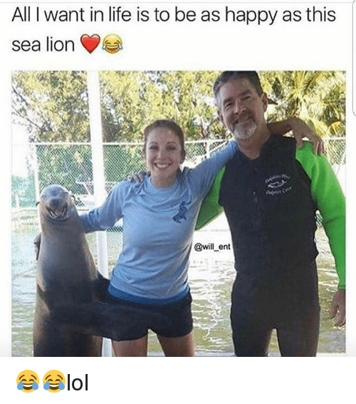 Life, Memes, and Happy: All want in life is to be as happy as this  sea lion  @will ent 😂😂lol