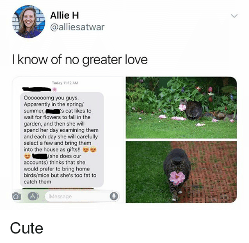 Apparently, Cute, and Fall: Allie H  @alliesatwar  I know of no greater love  Today 11:12 AM  Ooooooomg you guys.  Apparently in the spring/  summer,'s cat likes to  wait for flowers to fall in thee  garden, and then she will  spend her day examining them  and each day she will carefully  select a few and bring them  into the house as gifts!  (she does our  accounts) thinks that she  would prefer to bring home  birds/mice but she's too fat to  catch them  Message Cute