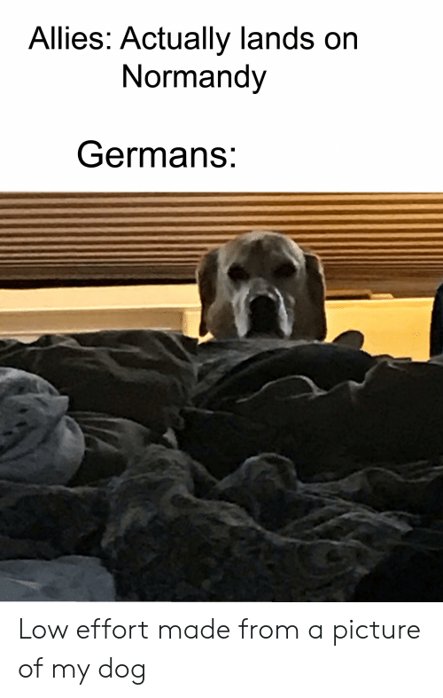 History, A Picture, and Dog: Allies: Actually lands on  Normandy  Germans: Low effort made from a picture of my dog