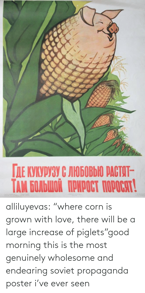 "Love, Tumblr, and Good Morning: alliluyevas:  ""where corn is grown with love, there will be a large increase of piglets""good morning this is the most genuinely wholesome and endearing soviet propaganda poster i've ever seen"