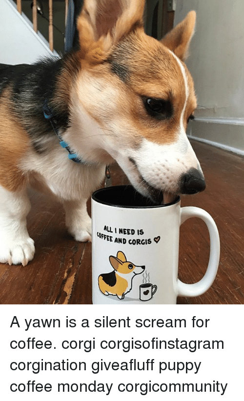 allineed is ffee and corgis a yawn is a silent scream for coffee