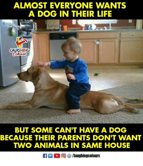 Animals, Life, and Parents: ALMOST EVERYONE WANTS  A DOG IN THEIR LIFE  LAUGHING  BUT SOME CAN'T HAVE A DOG  BECAUSE THEIR PARENTS DON'T WANT  TWO ANIMALS IN SAME HOUSE
