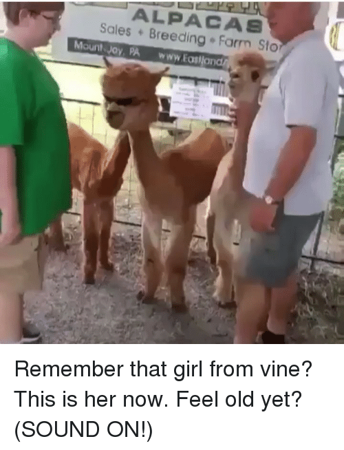 Funny, Vine, and Girl: ALPACAS  Sales Breeding Farm Sto  Mount Joy, PA www.Eas Remember that girl from vine? This is her now. Feel old yet? (SOUND ON!)
