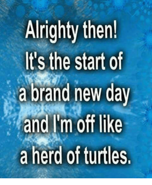 Dank, Turtle, and Alrighty Then: Alrighty then!  It's the start of  a brand new day  and Im off like  a herd of turtles