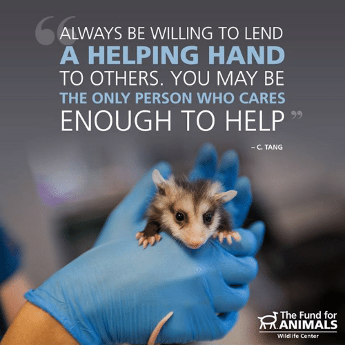 making a difference through lending a helping hand to others Lend a hand: be a volunteer every person in this world has a responsibility to help the unfortunate and to make this world a better place to live many people and organizations, indeed for centuries, have done much charitable work and continue to do so.