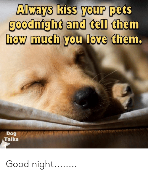Always Kiss Your Pets Goodnighd And Tell Them How Much You Love Chem Dog Talks Good Night Love Meme On Me Me