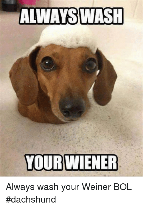 Facebook Funny Dog Pictures