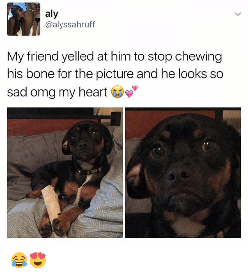 Memes, Omg, and Heart: aly  @alyssahruff  My friend yelled at him to stop chewing  his bone for the picture and he looks so  sad omg my heart 😂😍