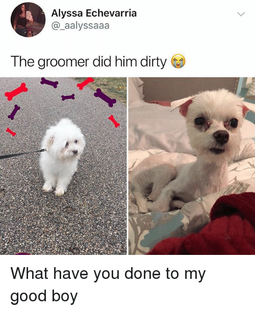 Memes, Dirty, and Good: Alyssa Echevarria  @_aalyssaaa  The groomer did him dirty What have you done to my good boy