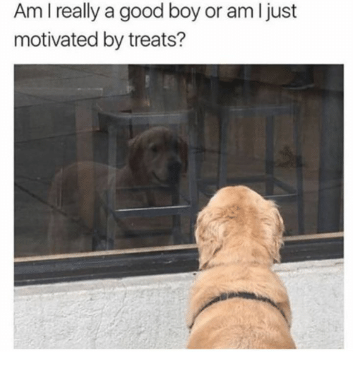Good, Boy, and Really: Am I really a good boy or am I just  motivated by treats?