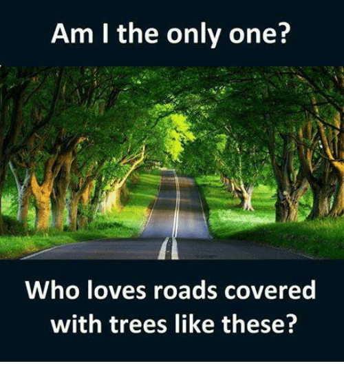 Memes, Trees, and Only One: Am I the only one?  Who loves roads covered  with trees like these?