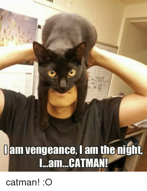 Grumpy Cat, Catman, and I Am the Night: am vengeance, I am the night.  I...am...CATMAN! catman! :O