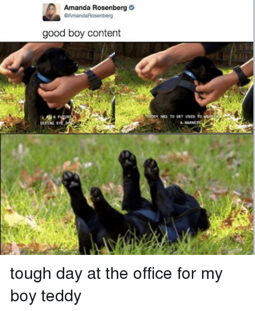 The Office, Good, and Office: Amanda Rosenberg  GAmandaRosenberg  good boy content  Ms TO GET USED fo  AHARNE tough day at the office for my boy teddy