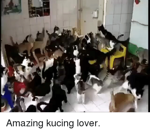 Amazing, Indonesian (Language), and Lover: Amazing kucing lover.
