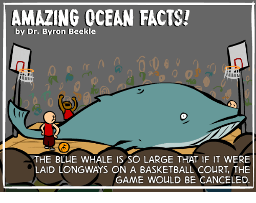 AMAZING OCEAN FACTS! By Dr Byron Beekle 292000 9 THE BLUE