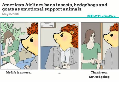 Image of: Pedigree Dogs Animals Life And Thank You American Airlines Bans Insects Hedgehogs And Goats Love On Leash American Airlines Bans Insects Hedgehogs And Goats As Emotional