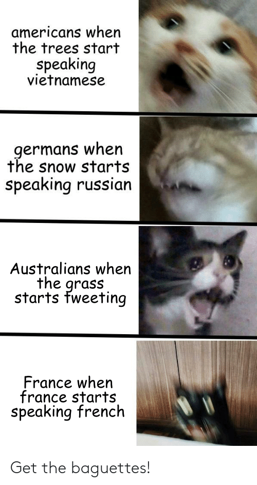 France, Snow, and Trees: americans when  the trees start  Speaking  vietnamese  germans when  the snow starts  speaking russian  Australians when  the grass  starts fweeting  France when  france starts  speaking french Get the baguettes!