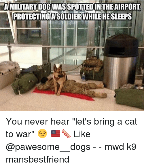 "Dogs, Memes, and Military: AMLITAIRYDIBWISSPDUUED  A MILITARY DOG WASSPOTTEDIN THEAIRPORT  ICROTECTIIDAS ERWILL3HE  PROTECTING ASOLDIERWHILEHE SLEEPS You never hear ""let's bring a cat to war"" 😏 🇺🇸🥓 Like @pawesome__dogs - - mwd k9 mansbestfriend"