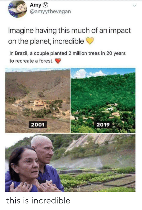 Brazil, Trees, and Forest: Amy  @amyythevegan  Imagine having this much of an impact  on the planet, incredible  In Brazil, a couple planted 2 million trees in 20 years  to recreate a forest.  2001  2019 this is incredible