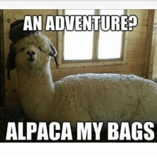 Memes, Alpaca, and 🤖: AN ADVENTURE ALPACA MY BAGS