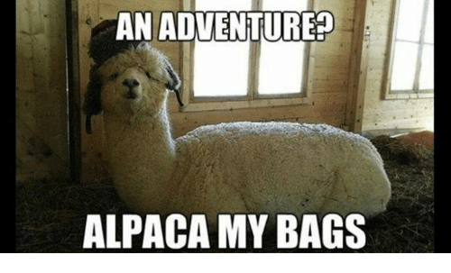 Memes, Alpaca, and 🤖: AN ADVENTURE? ALPACA MY BAGS