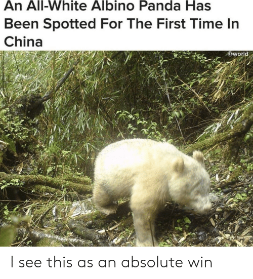China, Panda, and Time: An All-White Albino Panda Has  Been Spotted For The First Time In  China  @world I see this as an absolute win