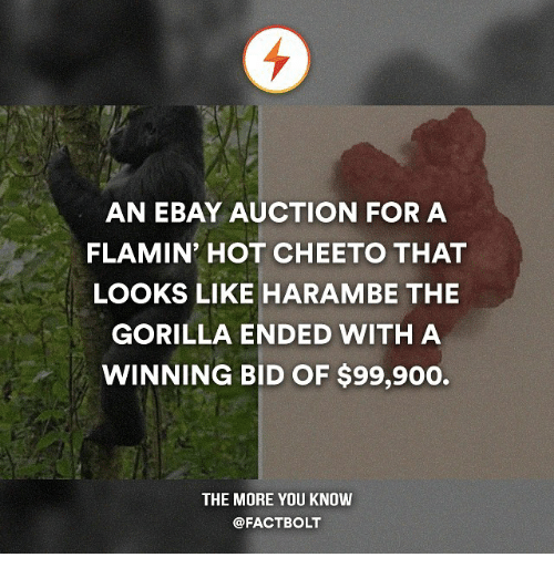 Memes, 🤖, and Bolt: AN EBAY AUCTION FOR A  FLAMIN' HOT CHEETO THAT  LOOKS LIKE HARAMBE THE  GORILLA ENDED WITH A  WINNING BID OF $99,900.  THE MORE YOU KNOW  @FACT BOLT
