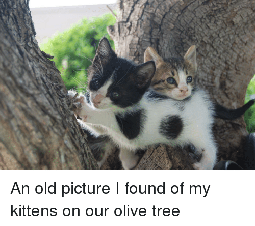 Kittens, Tree, and Old