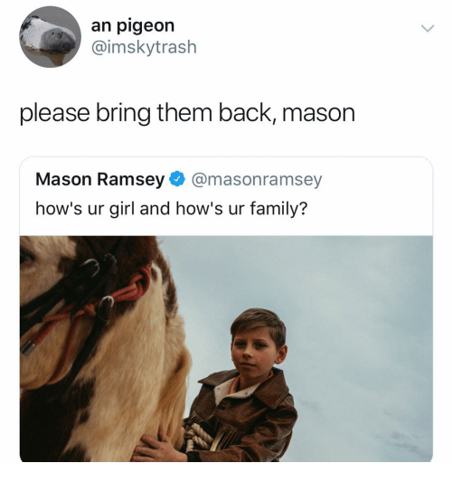 Family, Girl, and Dank Memes: an pigeon  @imskytrash  please bring them back, mason  Mason Ramsey@masonramsey  how's ur girl and how's ur family?