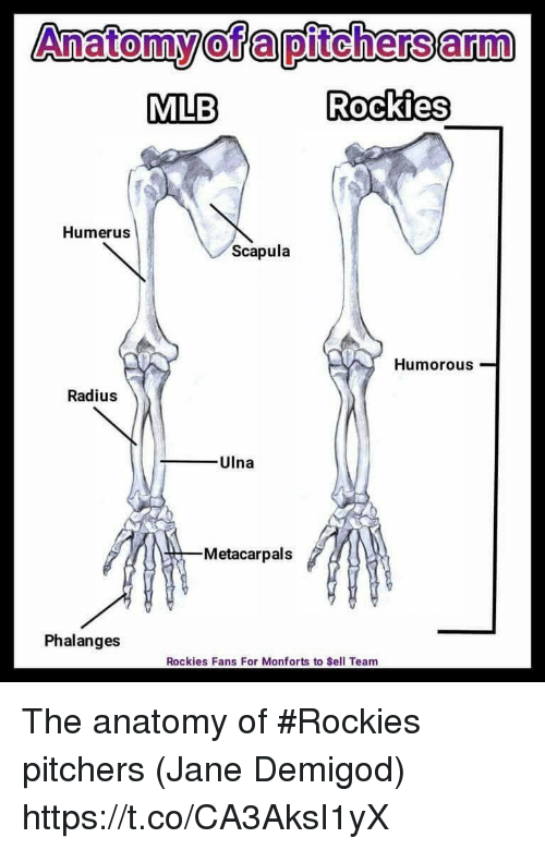 Anatomy Anatomy Of A Pitchers Arm Mlb Rockies Humerus Scapula