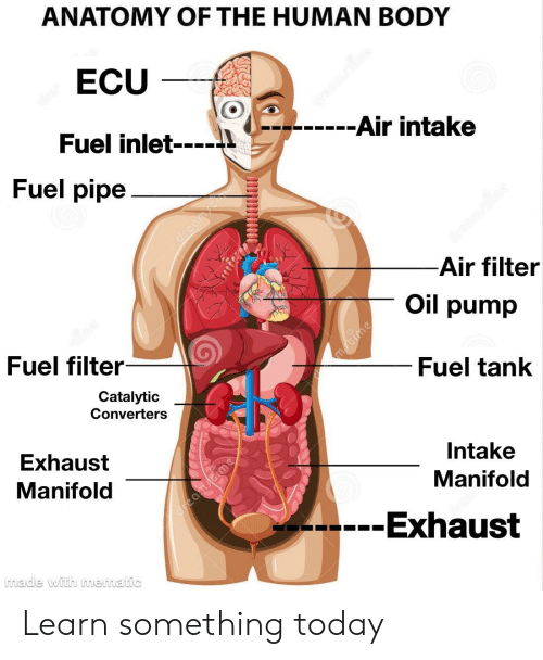 reddit, today, and human: anatomy of the human body ecu fuel inlet 41