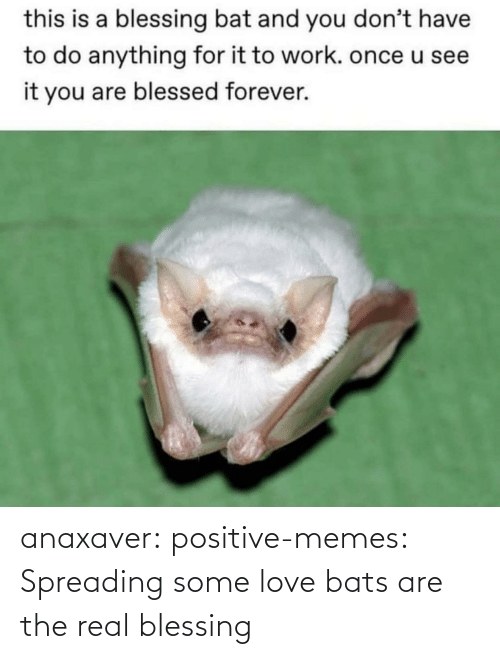 Love, Memes, and Tumblr: anaxaver: positive-memes: Spreading some love bats are the real blessing