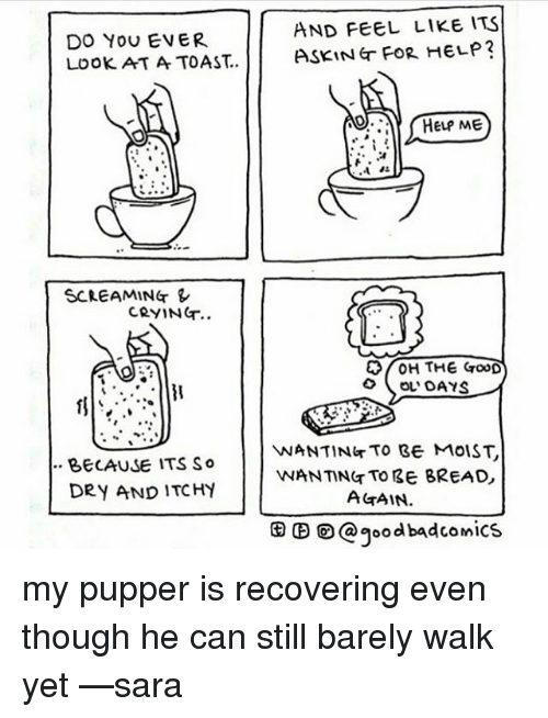 Crying, Memes, and Good: AND FEEL LIKE ITS  DO YOU EVER  HELP?  Look AT A TOAST.. ASKING FOR HELP ME  SCREAMING  CRYING  H THE GooD  OL DAYS  VNANTING TO BE MOIST  BECAUSE ITS So  WANTING TO BE BREAD  DRY AND ITCHY  AGAIN.  CO a good badcomics my pupper is recovering even though he can still barely walk yet —sara