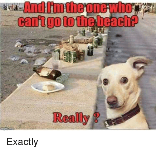 Memes, Beach, and 🤖: And I'm the one who  cantgoto the beach?  Really Exactly