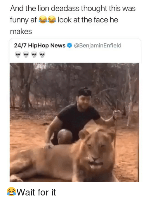 Af, Funny, and Memes: And the lion deadass thought this was  funny af look at the face he  makes  24/7 HipHop News  @BenjaminEnfield 😂Wait for it