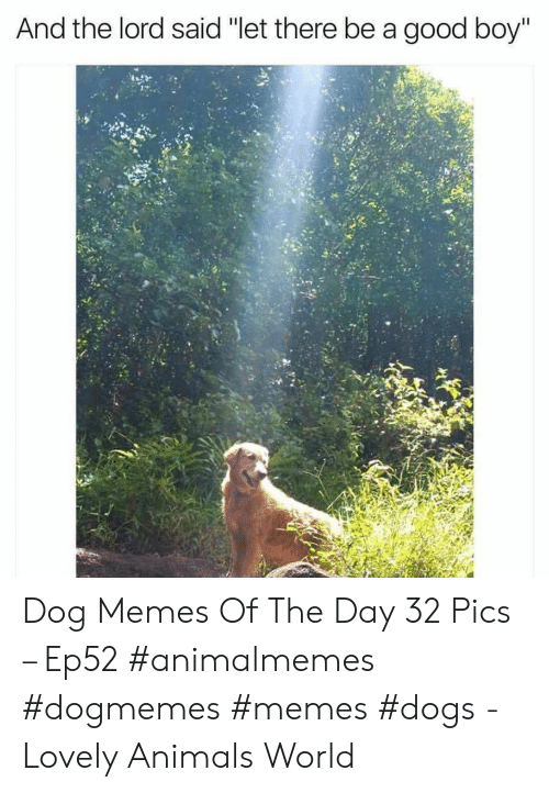 """Animals, Dogs, and Memes: And the lord said """"let there be a good boy"""" Dog Memes Of The Day 32 Pics – Ep52 #animalmemes #dogmemes #memes #dogs - Lovely Animals World"""