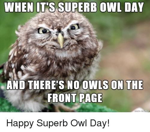 Happy, Superb, and Page: AND THERE'S NO OWLS ON THE  FRONT PAGE Happy Superb Owl Day!
