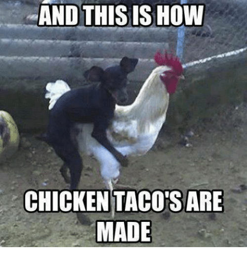 and-this-is-how-chicken-tacos-are-made-2