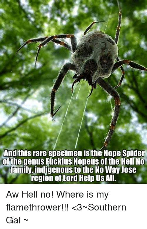 And This Rare Specimen Is the Nope Spider of the Genus ...