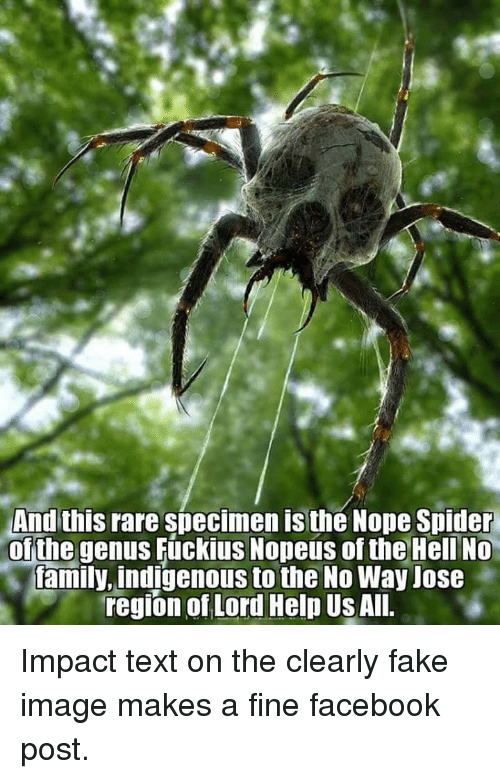 Facebook, Fake, and Spider: And this rare specimen is the Nope Spider  of the genus Fúckius Nopeus of the Hell No  .İfamily, indigenous to the No Way Jose-  region of Lord Help Us Al.