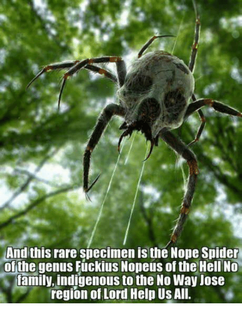 Dank, Family, and Spider: And this rare specimen is the Nope Spider  of the genus Fuckius Nopeus of the Hell No  family, indigenous to the No Way Uose  region of Lord Help Us All.