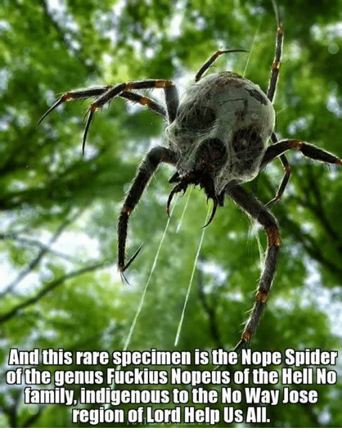 Ali, Family, and Memes: And this rare specimen is the Nope Spider  ofthe genus Fuckius Nopeús of the Heli No  family, indigenous to the No Way Jos  region of Lord Help Us AlI.