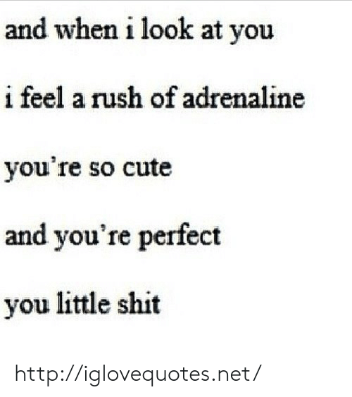 Cute, Shit, and Http: and when i look at you  i feel a rush of adrenaline  you're so cute  and you're perfect  you little shit http://iglovequotes.net/