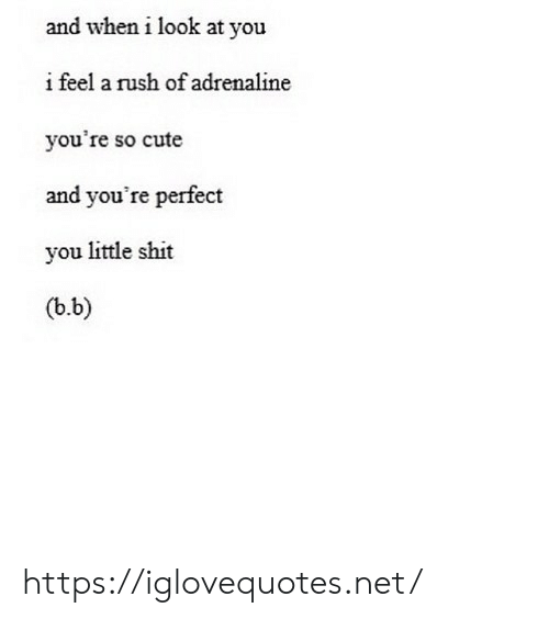 Cute, Shit, and Rush: and when i look at you  ifeel a rush of adrenaline  you're so cute  and you're perfect  you little shit  (b.b) https://iglovequotes.net/