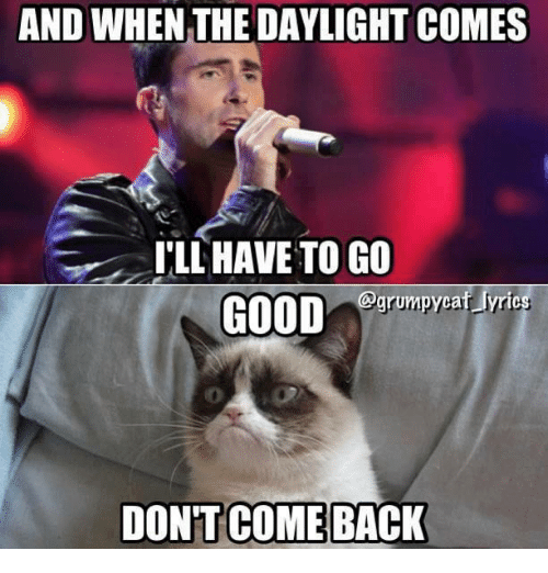 Grumpy Cat, Daylight, and And-When-The-Daylight: AND WHEN THE DAYLIGHT COMES  ILL HAVE TO GO  grumpycat lyrics  GOOD  DONT COMEBACK